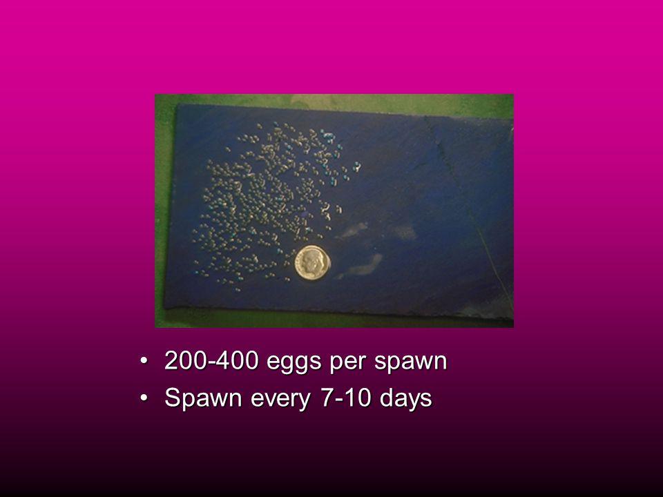 200-400 eggs per spawn200-400 eggs per spawn Spawn every 7-10 daysSpawn every 7-10 days