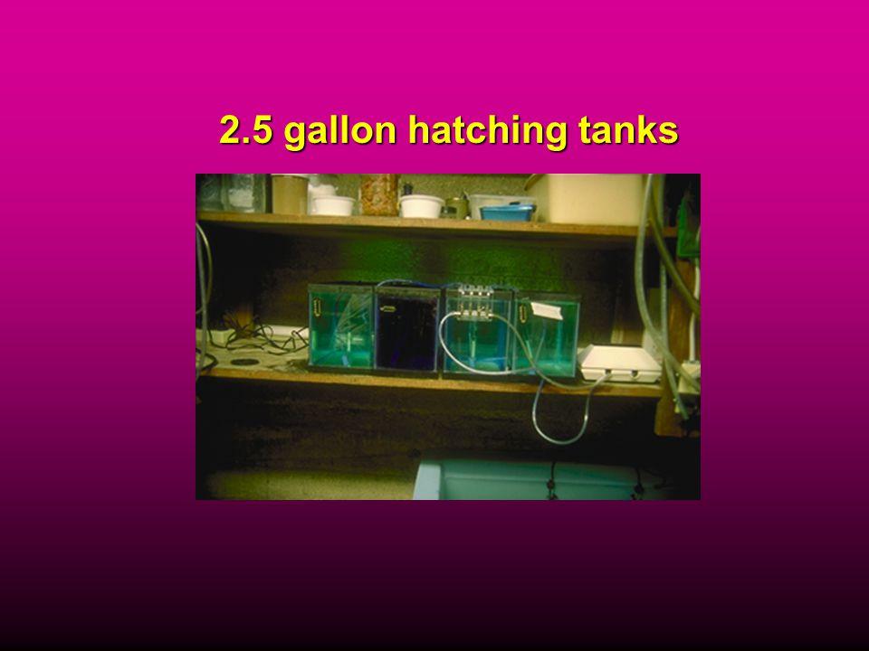 2.5 gallon hatching tanks