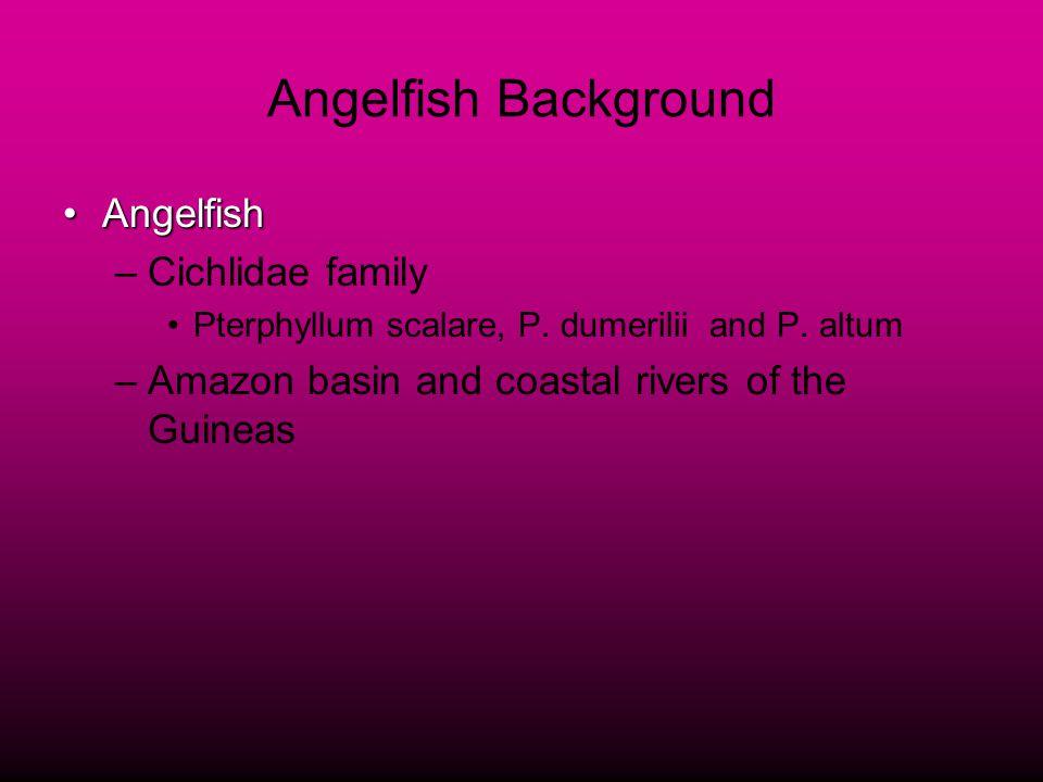 Angelfish Background AngelfishAngelfish –Cichlidae family Pterphyllum scalare, P.