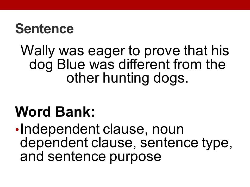 Sentence Wally was eager to prove that his dog Blue was different from the other hunting dogs. Word Bank: Independent clause, noun dependent clause, s