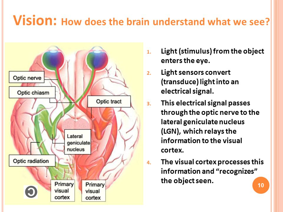 1.Light (stimulus) from the object enters the eye.