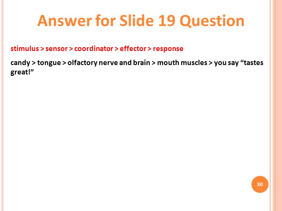 30 stimulus > sensor > coordinator > effector > response candy > tongue > olfactory nerve and brain > mouth muscles > you say tastes great! Answer for Slide 19 Question