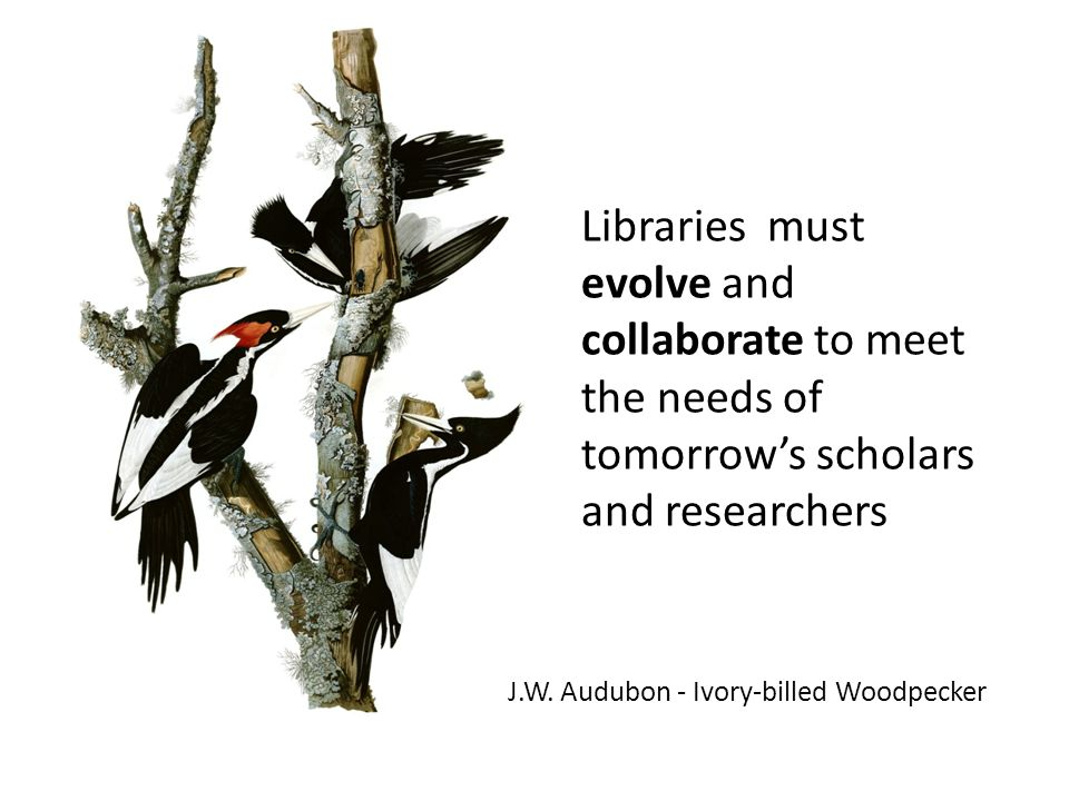 J.W. Audubon - Ivory-billed Woodpecker Libraries must evolve and collaborate to meet the needs of tomorrow's scholars and researchers