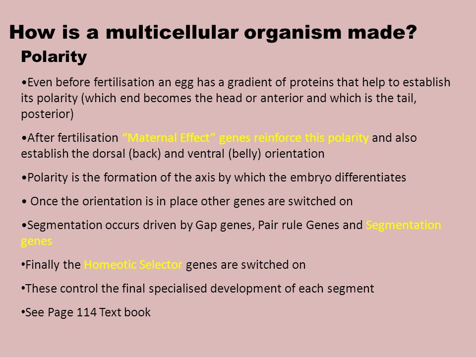 How is a multicellular organism made.