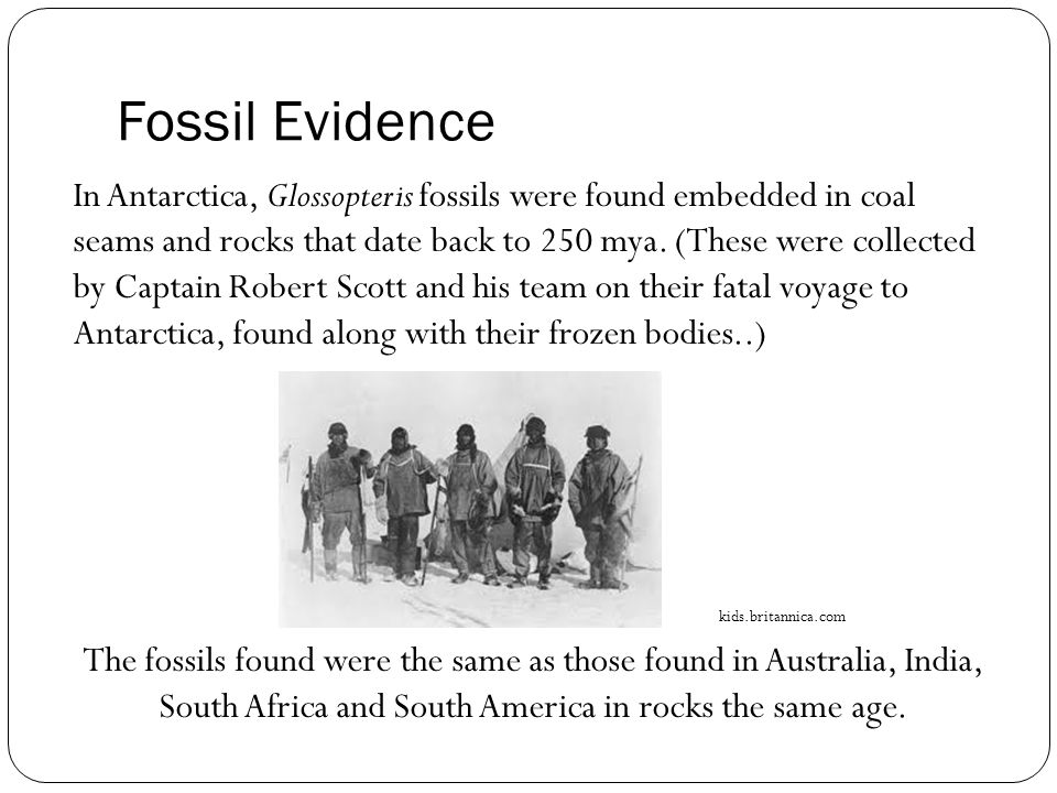 Fossil Evidence In Antarctica, Glossopteris fossils were found embedded in coal seams and rocks that date back to 250 mya.