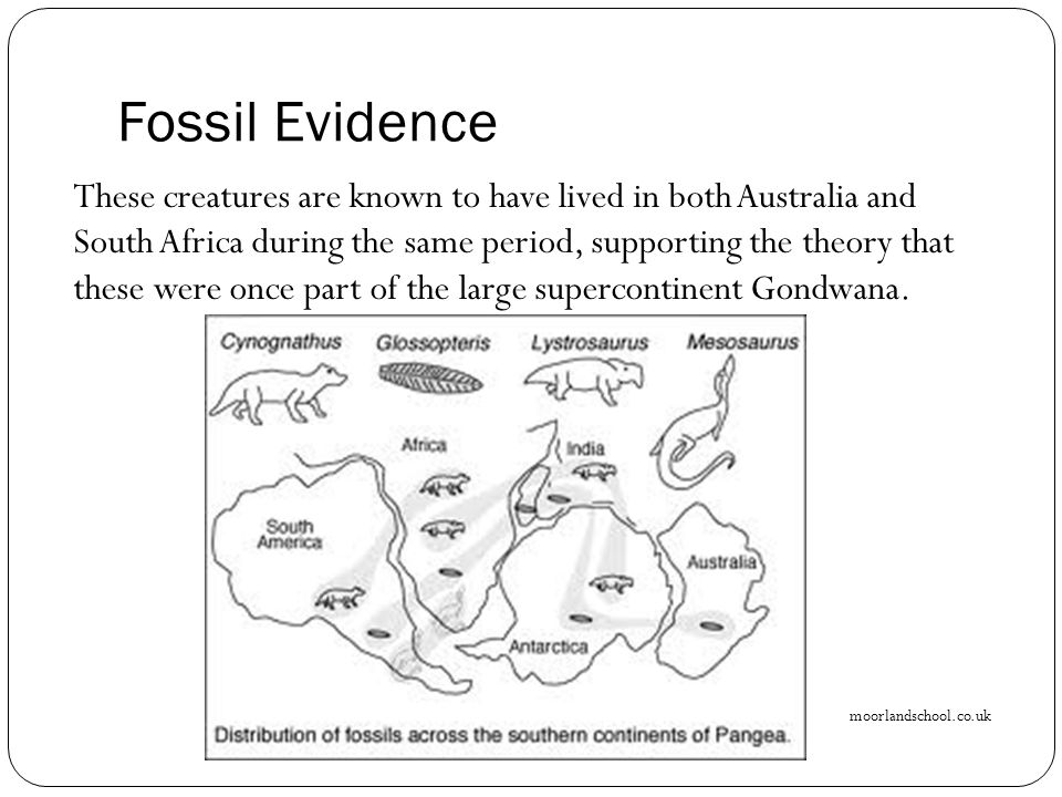 Fossil Evidence These creatures are known to have lived in both Australia and South Africa during the same period, supporting the theory that these we
