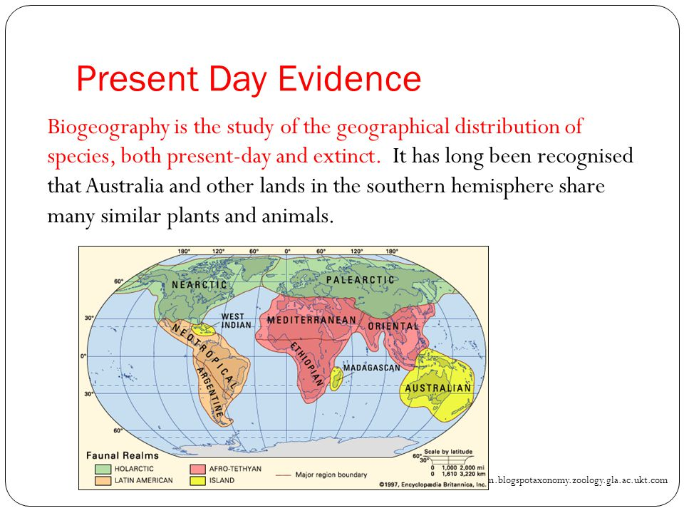 Present Day Evidence Biogeography is the study of the geographical distribution of species, both present-day and extinct. It has long been recognised