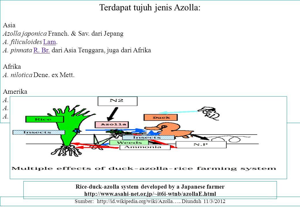 Terdapat tujuh jenis Azolla: Asia Azolla japonica Franch. & Sav. dari Jepang A. filiculoides Lam.Lam A. pinnata R. Br. dari Asia Tenggara, juga dari A