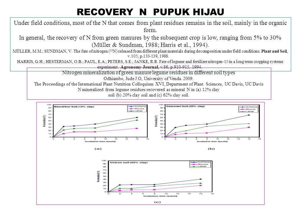 PUPUK HIJAU DAN HASIL PADI Dry matter yield and nitrogen utilized by rice plants, in the control treatment, and Dunnett test significance, contrasting the effects of treatments involving velvet bean incorporation relative to the control Velvet bean incorporation increased dry matter yield of rice plants relatively to the control, except for the 240- day incubation period.