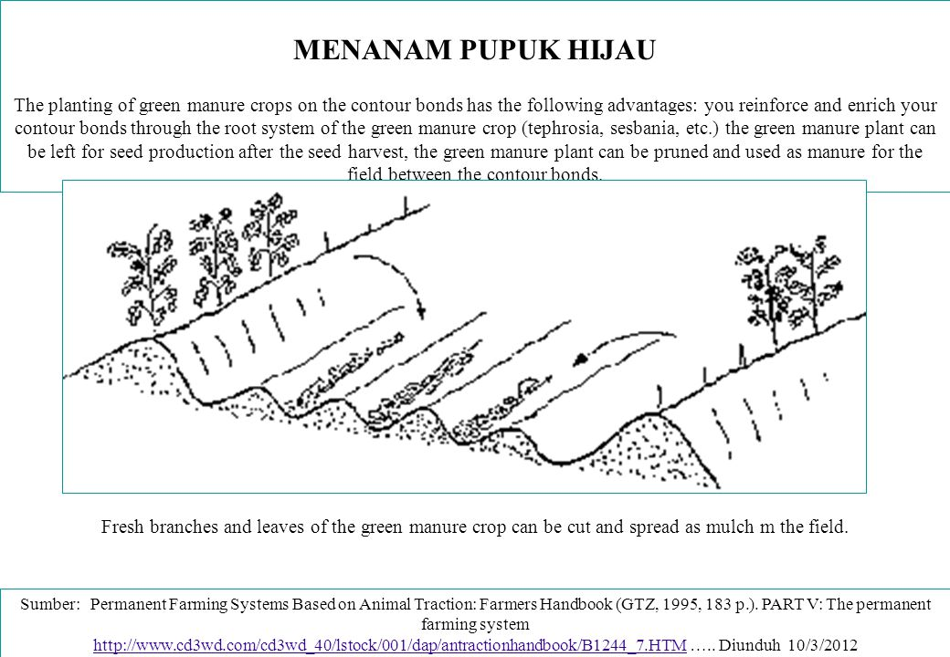 BERO DENGAN TANAMAN PUPUK HIJAU If you have a very poor soil, you may have to fallow your farm Under natural fallow, it will take long time until the soil becomes fertile again Under a planted fallow with Green Manure Plants, the soil becomes fertile again within 1 or 2 years.