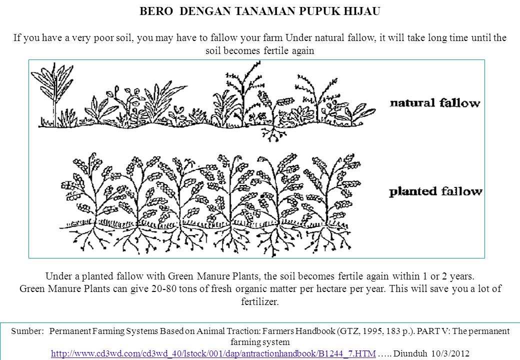 BERO DENGAN TANAMAN PUPUK HIJAU If you have a very poor soil, you may have to fallow your farm Under natural fallow, it will take long time until the