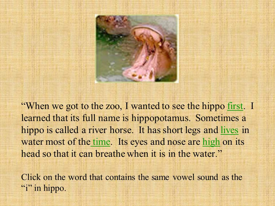 When we got to the zoo, I wanted to see the hippo first.
