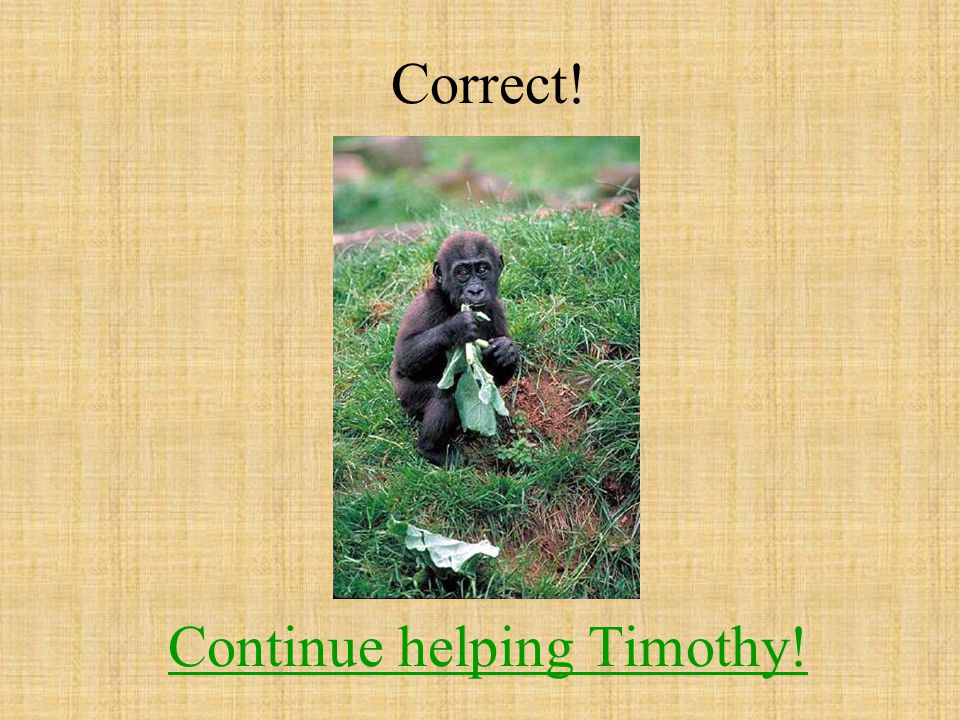 Correct! Continue helping Timothy! Continue helping Timothy!