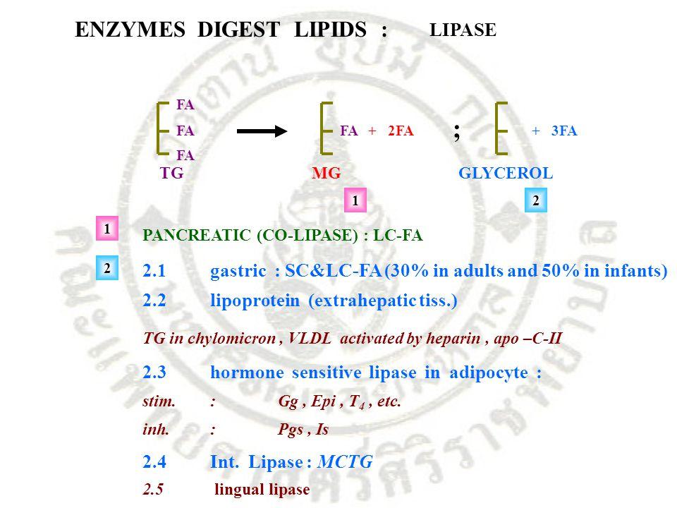 ENZYMES DIGEST LIPIDS : LIPASE FA TG FA+ 2FA MG + 3FA GLYCEROL ; 12 PANCREATIC (CO-LIPASE) : LC-FA 2.1gastric : SC&LC-FA (30% in adults and 50% in inf
