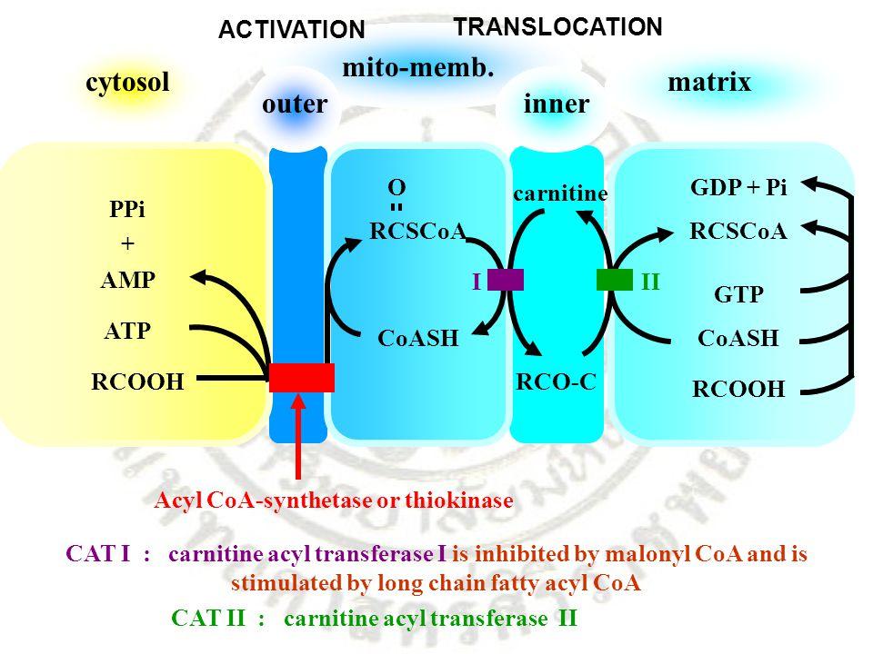 cytosol outerinner mito-memb. matrix PPi + AMP ATP RCOOH RCSCoA CoASH carnitine RCO-C RCSCoA CoASH RCOOH GDP + Pi GTP O III Acyl CoA-synthetase or thi