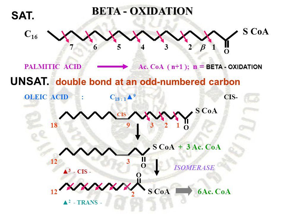 BETA - OXIDATION C 16 S CoA 1234567  O BETA - OXIDATION PALMITIC ACIDAc. CoA ( n+1 ); n = BETA - OXIDATION OLEIC ACID:C 18 : 1 ▲ 9 CIS- O S CoA 12391