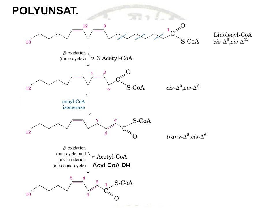 POLYUNSAT. Acyl CoA DH