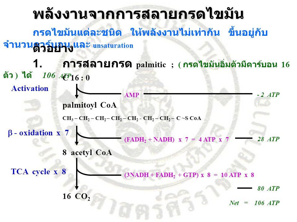 พลังงานจากการสลายกรดไขมัน กรดไขมันแต่ละชนิด ให้พลังงานไม่เท่ากัน ขึ้นอยู่กับ จำนวนคาร์บอน และ unsaturation ตัวอย่าง 1. การสลายกรด palmitic ; ( กรดไขมั