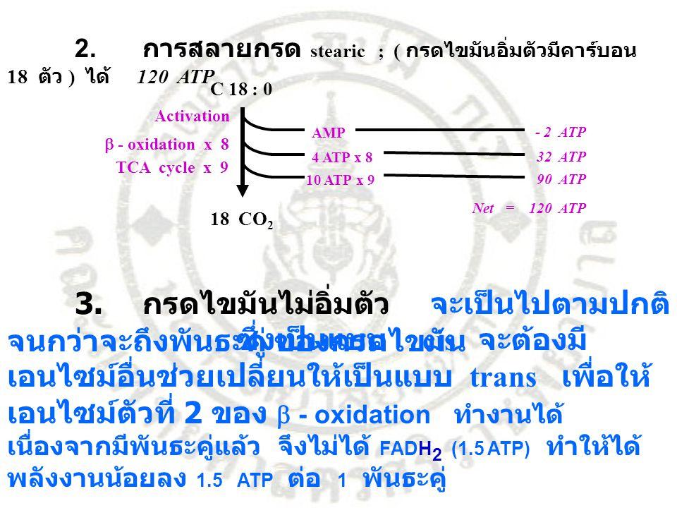 2. การสลายกรด stearic ; ( กรดไขมันอิ่มตัวมีคาร์บอน 18 ตัว ) ได้ 120 ATP C 18 : 0 Activation  - oxidation x 8 TCA cycle x 9 18 CO 2 AMP - 2 ATP 4 ATP
