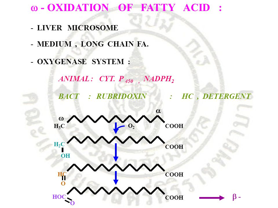 - OXIDATION OF FATTY ACID : - LIVER MICROSOME - MEDIUM, LONG CHAIN FA. - OXYGENASE SYSTEM : ANIMAL : CYT. P 450, NADPH 2 BACT : RUBRIDOXIN : HC, DET