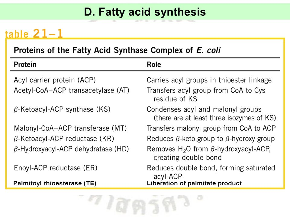 D. Fatty acid synthesis Palmitoyl thioesterase (TE) Liberation of palmitate product
