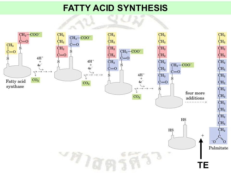 FATTY ACID SYNTHESIS TE