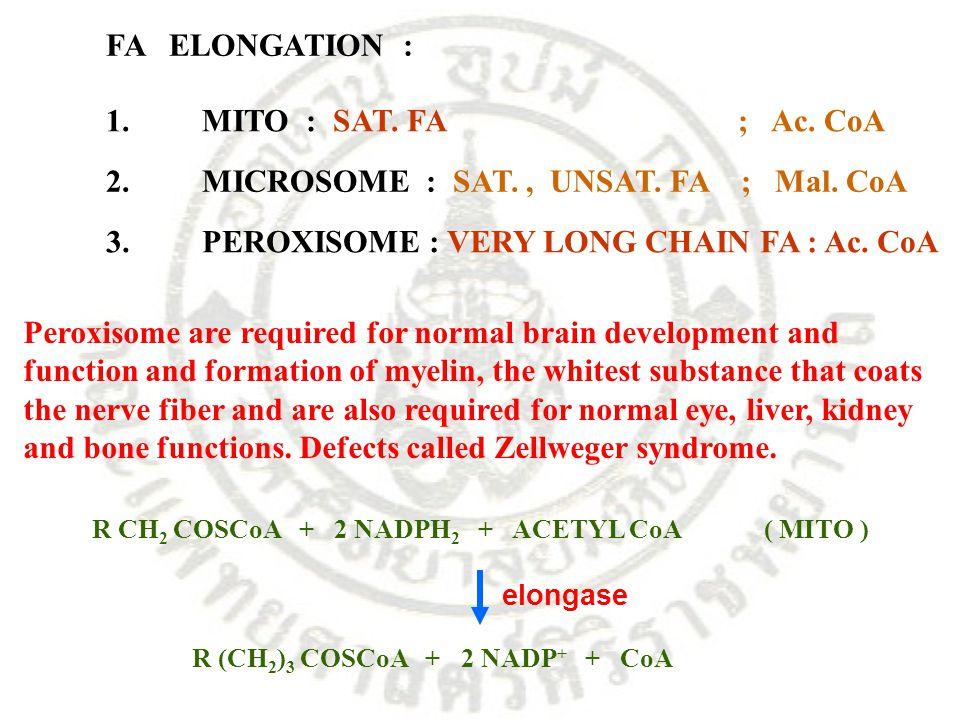 1.MITO : SAT. FA ; Ac. CoA 2.MICROSOME : SAT., UNSAT. FA ; Mal. CoA R CH 2 COSCoA + 2 NADPH 2 + ACETYL CoA( MITO ) R (CH 2 ) 3 COSCoA + 2 NADP + + CoA