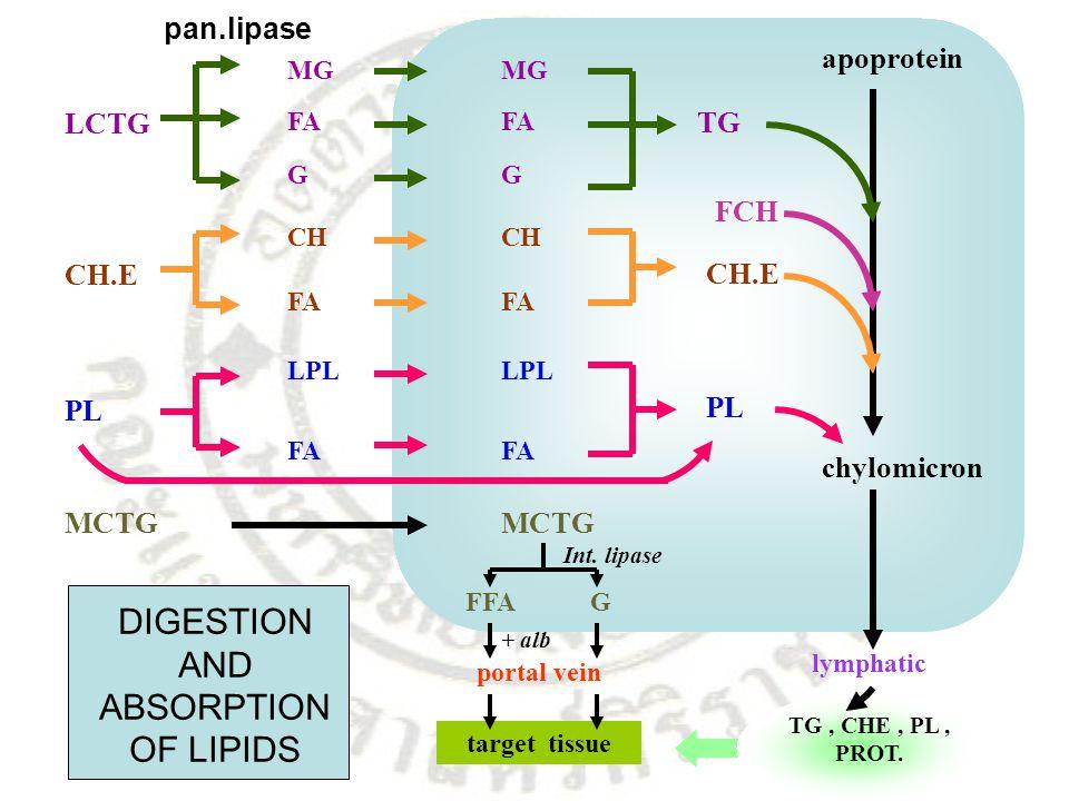 LCTG MG FA G CH.E CH FA PL LPL FA MG FA G CH FA LPL FA TG CH.E PL apoprotein chylomicron MCTG FFAG Int. lipase portal vein target tissue lymphatic TG,
