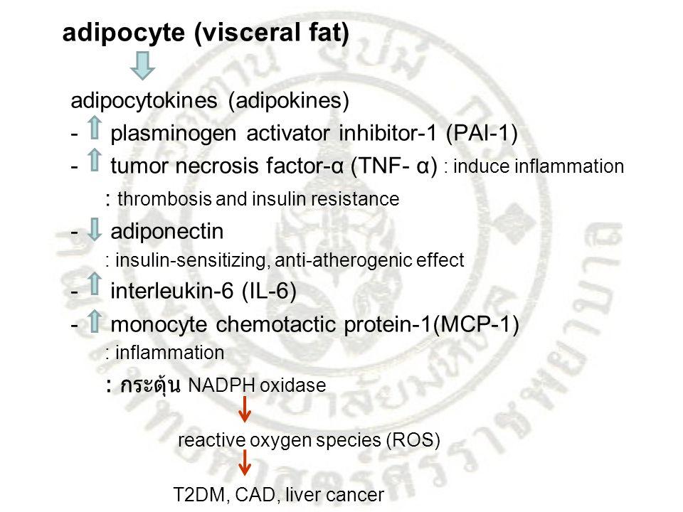 adipocyte (visceral fat) adipocytokines (adipokines) - plasminogen activator inhibitor-1 (PAI-1) - tumor necrosis factor-α (TNF- α) : induce inflammat