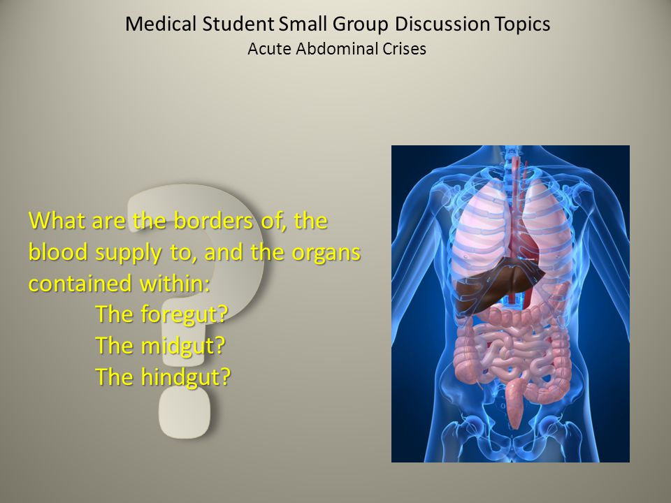 Medical Student Small Group Discussion Topics What are the borders of, the blood supply to, and the organs contained within: The foregut? The midgut?