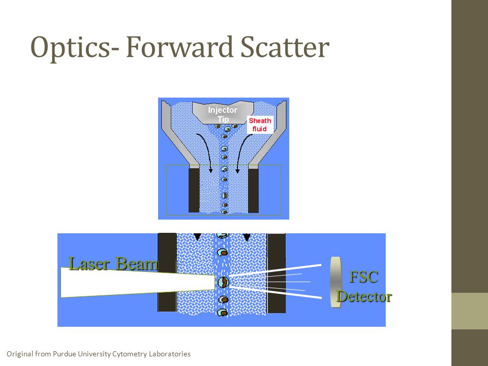 FSC Detector Laser Beam Original from Purdue University Cytometry Laboratories Optics- Forward Scatter