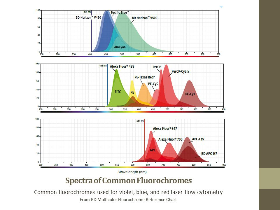 Spectra of Common Fluorochromes Common fluorochromes used for violet, blue, and red laser flow cytometry From BD Multicolor Fluorochrome Reference Chart