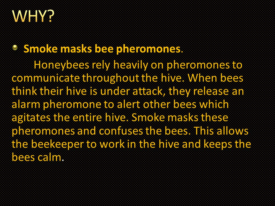 Smoke masks bee pheromones.