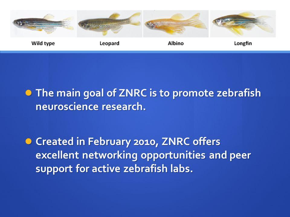 ZND Zebrafish Neurophenome Database Goals: Goals: Pioneering Pioneering Accessible Accessible Easy to use Easy to use Useful Useful