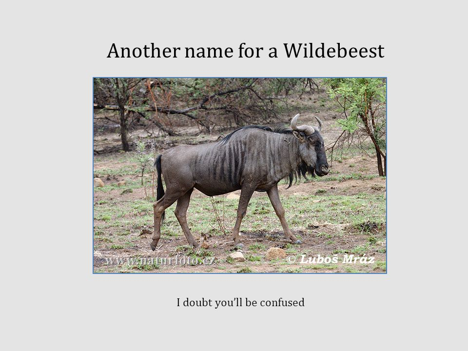 Another name for a Wildebeest I doubt you'll be confused