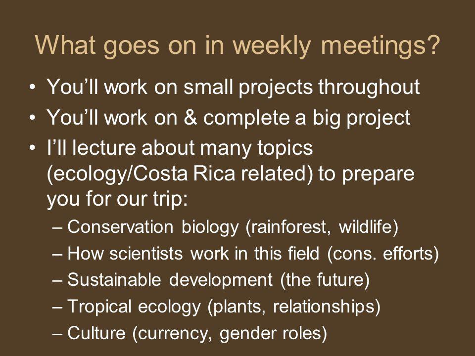 What goes on in weekly meetings.
