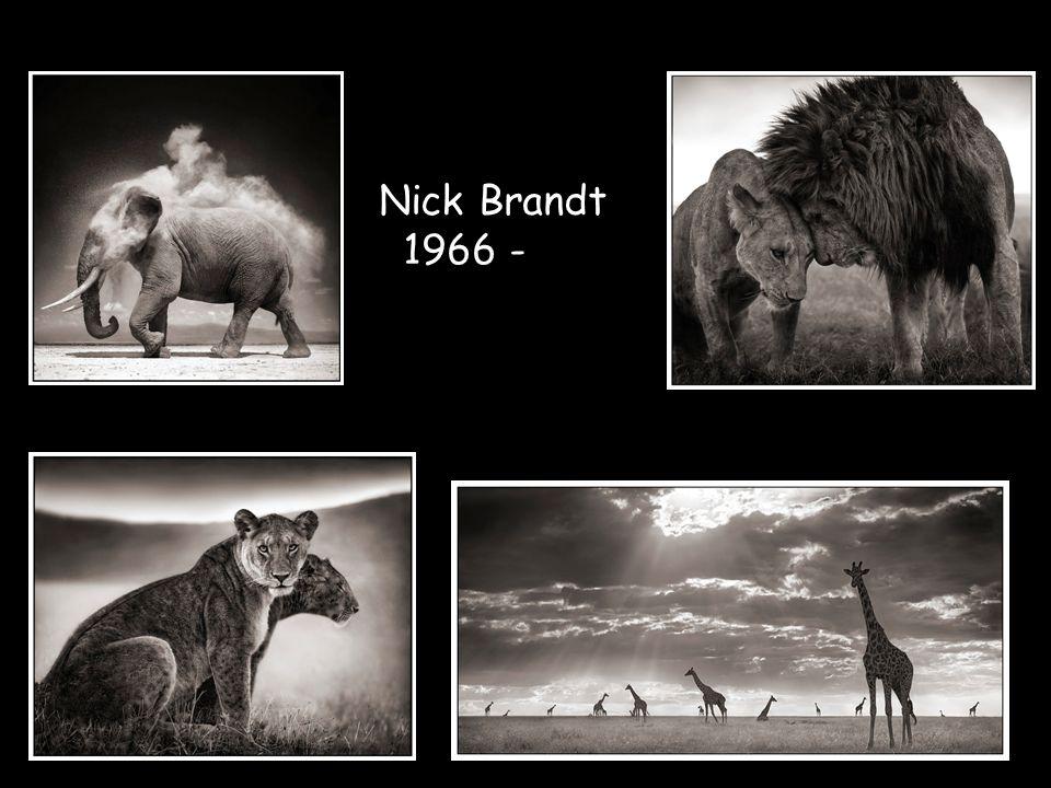 Nick Brandt 1966 -