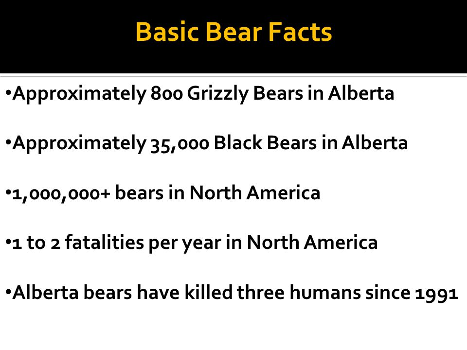 Basic Bear Facts Approximately 800 Grizzly Bears in Alberta Approximately 35,000 Black Bears in Alberta 1,000,000+ bears in North America 1 to 2 fatal