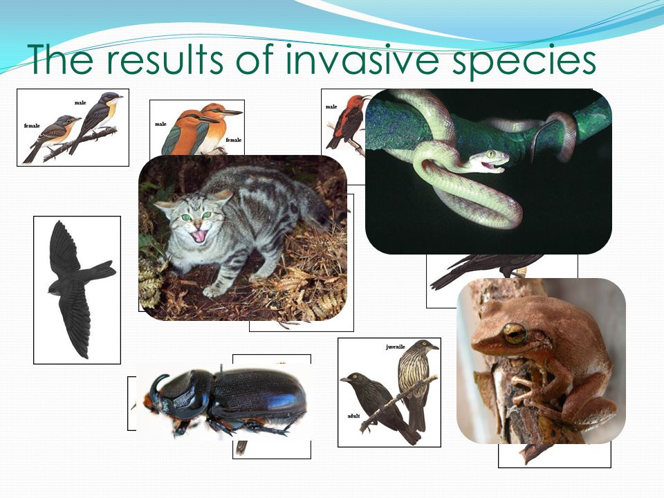 The results of invasive species