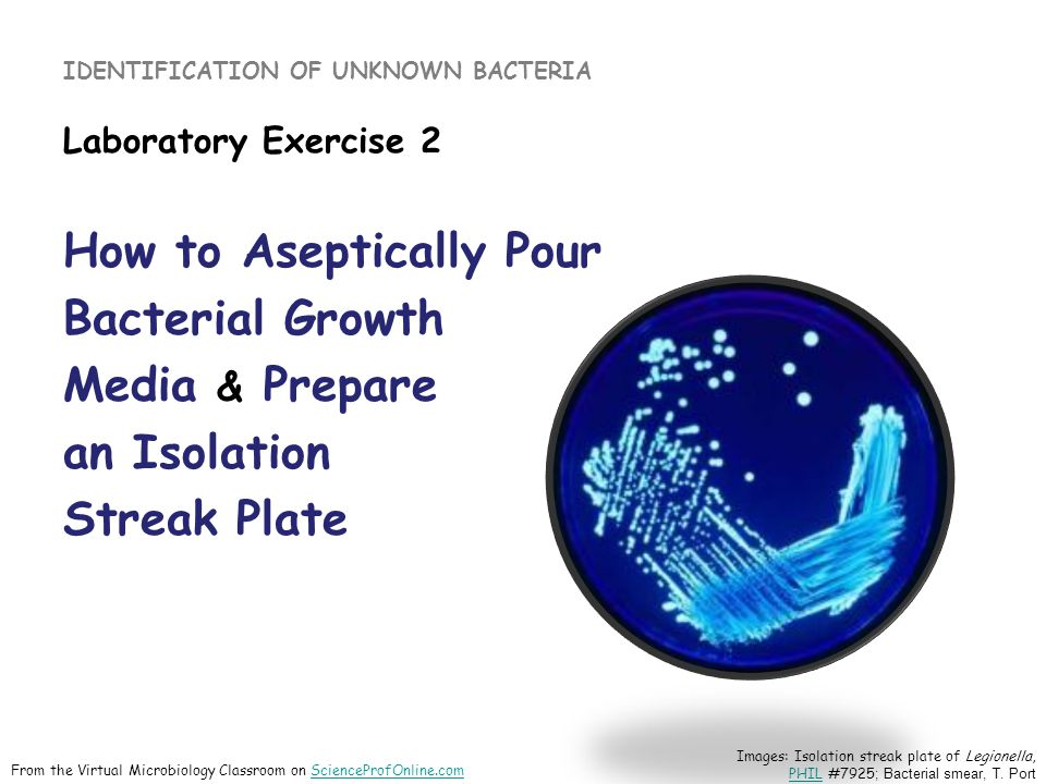 IDENTIFICATION OF UNKNOWN BACTERIA Laboratory Exercise 2 How to Aseptically Pour Bacterial Growth Media & Prepare an Isolation Streak Plate Images: Isolation streak plate of Legionella, PHIL #7925 ; Bacterial smear, T.