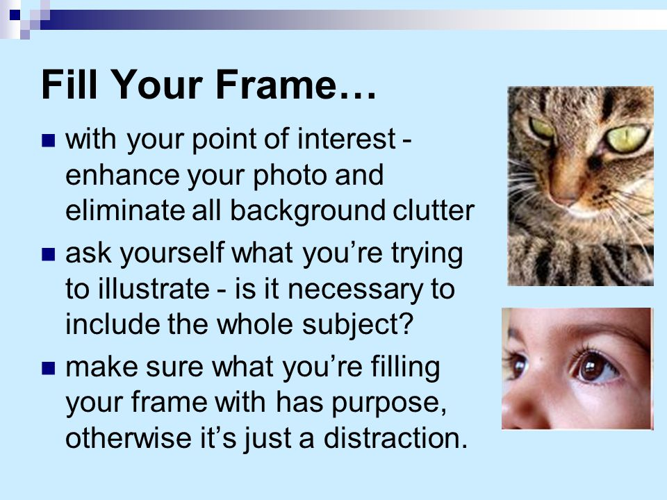 Fill Your Frame… with your point of interest - enhance your photo and eliminate all background clutter ask yourself what you're trying to illustrate -