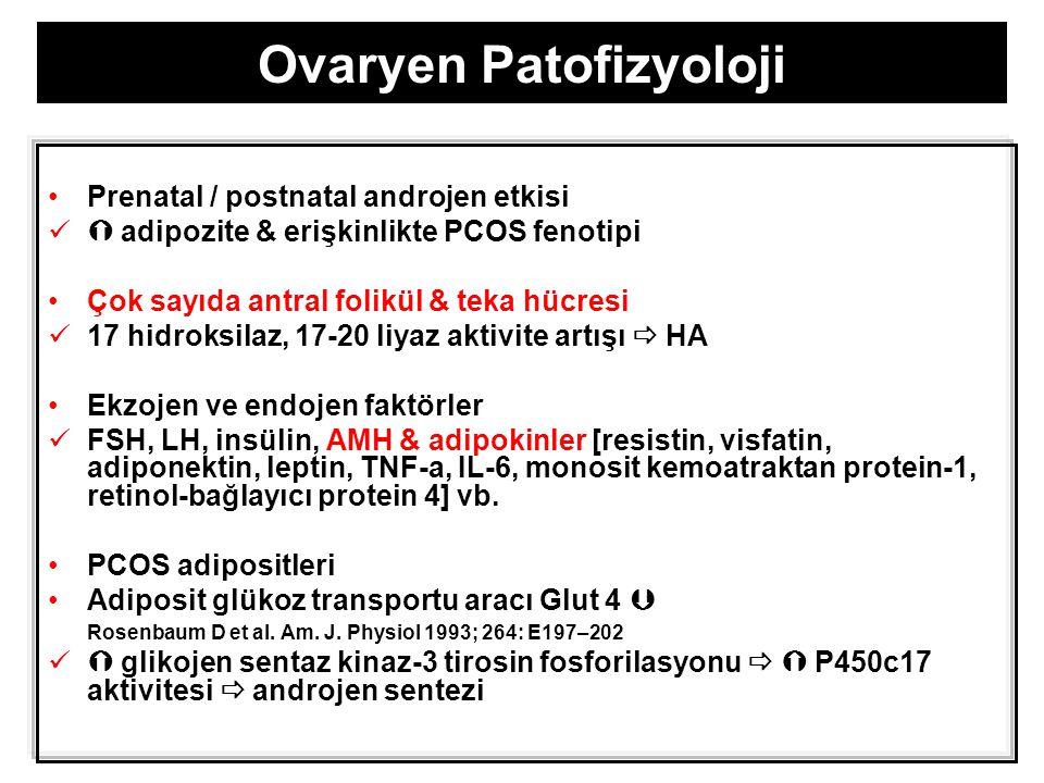 Ovaryen Patofizyoloji Prenatal / postnatal androjen etkisi  adipozite & erişkinlikte PCOS fenotipi Çok sayıda antral folikül & teka hücresi 17 hidroksilaz, 17-20 liyaz aktivite artışı  HA Ekzojen ve endojen faktörler FSH, LH, insülin, AMH & adipokinler [resistin, visfatin, adiponektin, leptin, TNF-a, IL-6, monosit kemoatraktan protein-1, retinol-bağlayıcı protein 4] vb.