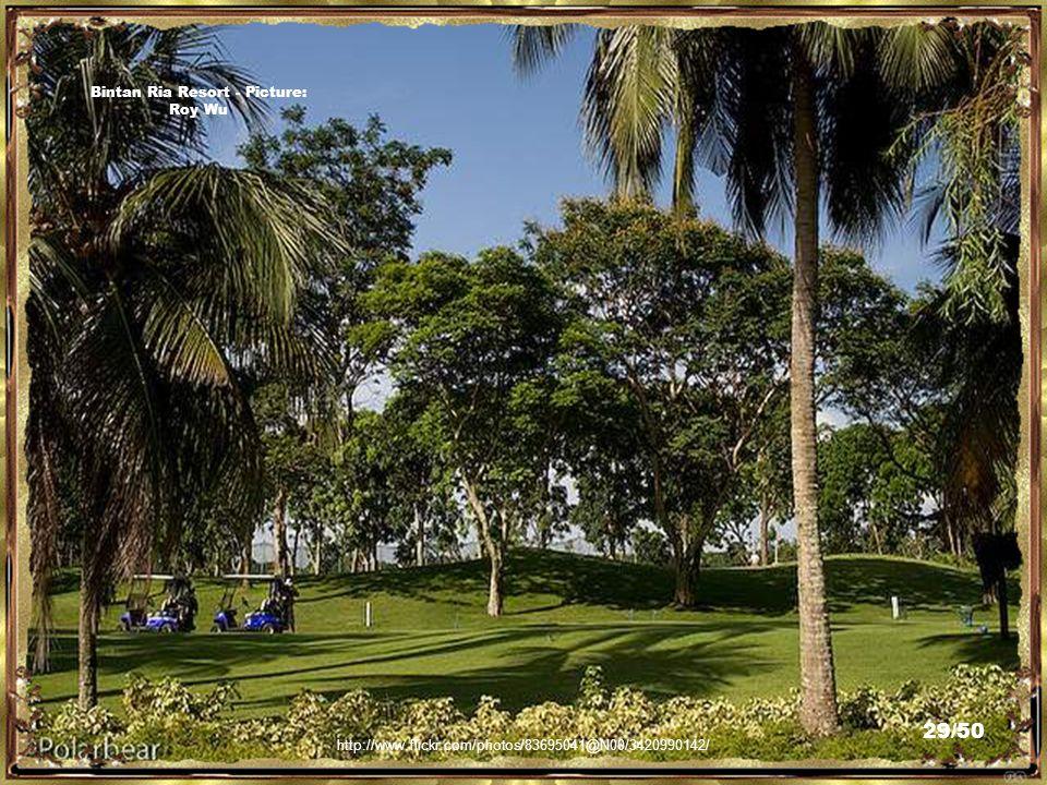 http://www.flickr.com/photos/83695041@N00/3421021546/ Bintan Ria Resort - Picture: Roy Wu 28/50