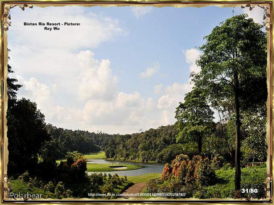 http://www.flickr.com/photos/83695041@N00/3421023324/ Bintan Ria Resort - Picture: Roy Wu 30/50