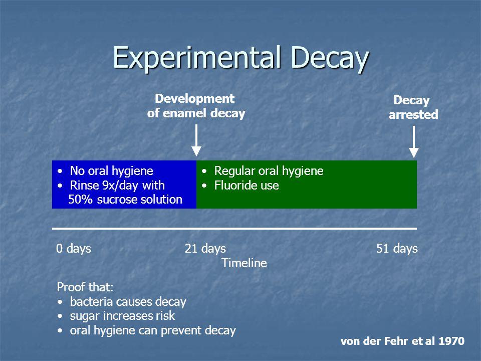 Experimental Decay 0 days 21 days 51 days Timeline No oral hygiene Rinse 9x/day with 50% sucrose solution Regular oral hygiene Fluoride use Developmen