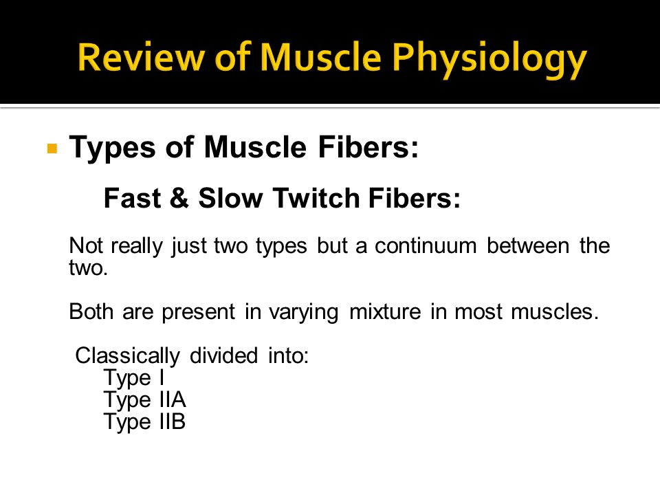 Types of Muscle Fibers: Fast & Slow Twitch Fibers: Not really just two types but a continuum between the two.