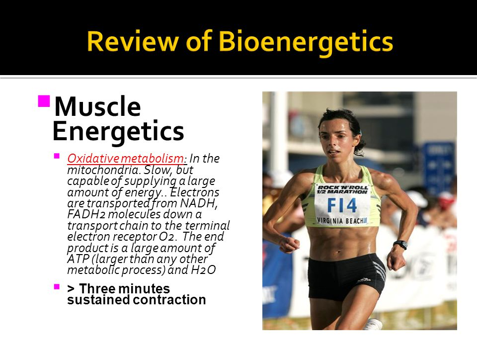  Muscle Energetics  Oxidative metabolism: In the mitochondria.