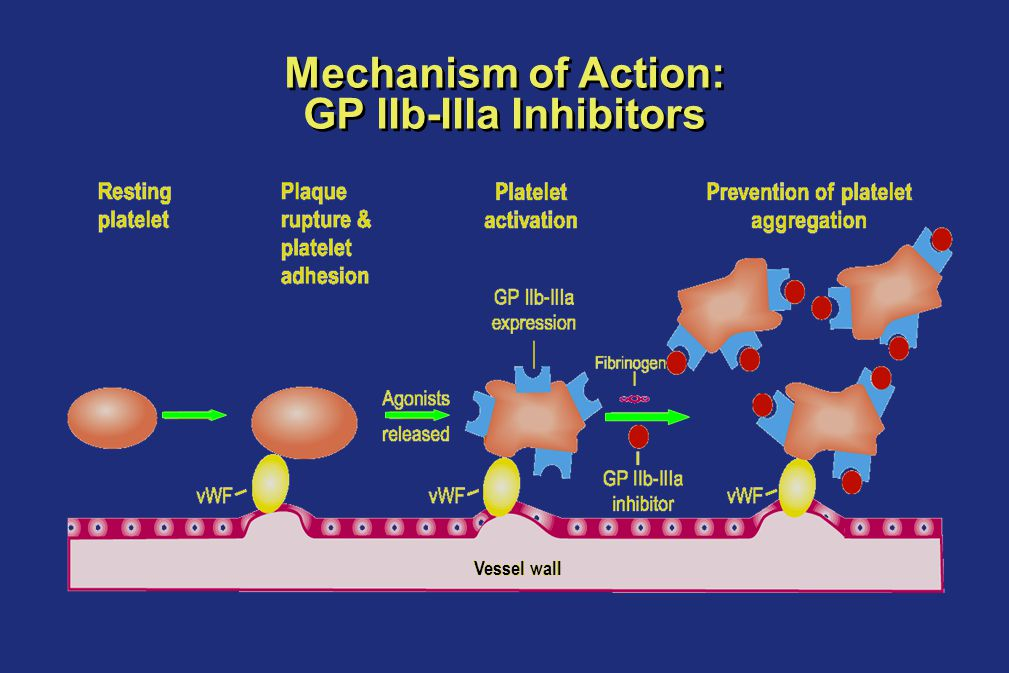 Mechanism of Action: GP IIb-IIIa Inhibitors White HD.