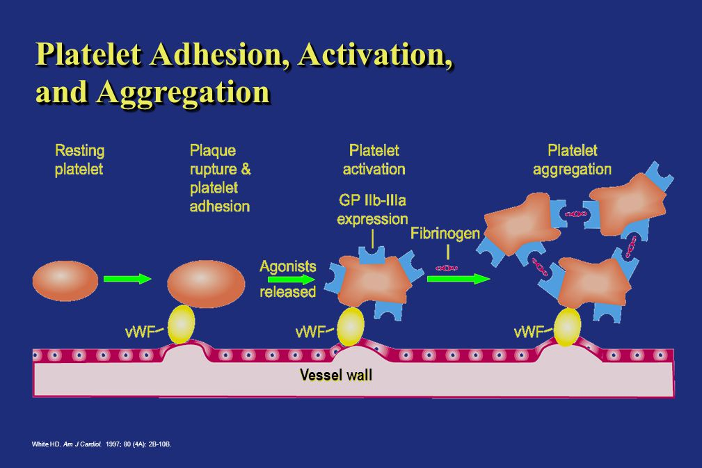 Platelet Adhesion, Activation, and Aggregation White HD.