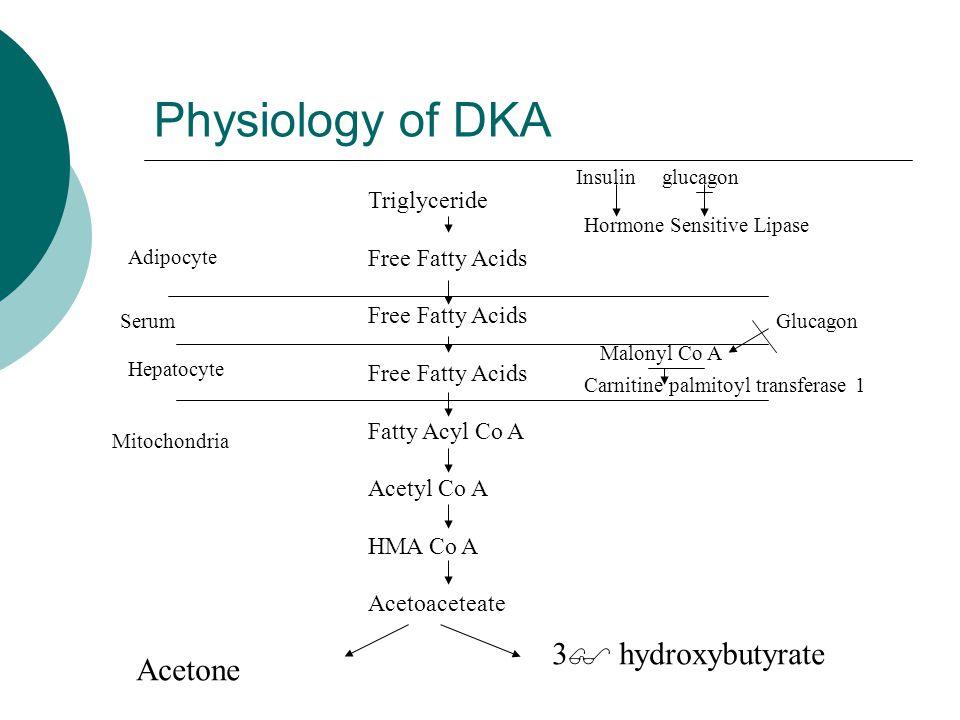 Physiology of DKA Triglyceride Free Fatty Acids Fatty Acyl Co A Acetyl Co A HMA Co A Acetoaceteate Acetone 3  hydroxybutyrate Adipocyte Serum Hepatoc